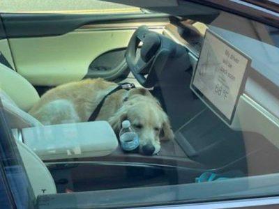 Το Dog Mode της Tesla διευκολύνει τη ζωή των ιδιοκτητών!